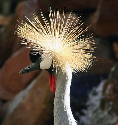 http://www.lonestarnorth.com/Pics%20Mike/NATURE/birds/exotic/crane.jpg